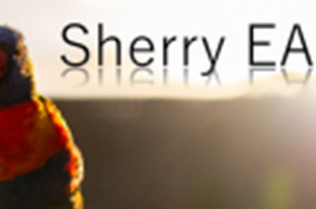 【FX自動売買EA】Sherry EAの評価・レビュー・検証結果まとめ